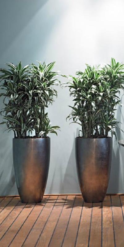 Interieurbeplanting alex gisbertz tuinarchitectuur for Interieur beplanting
